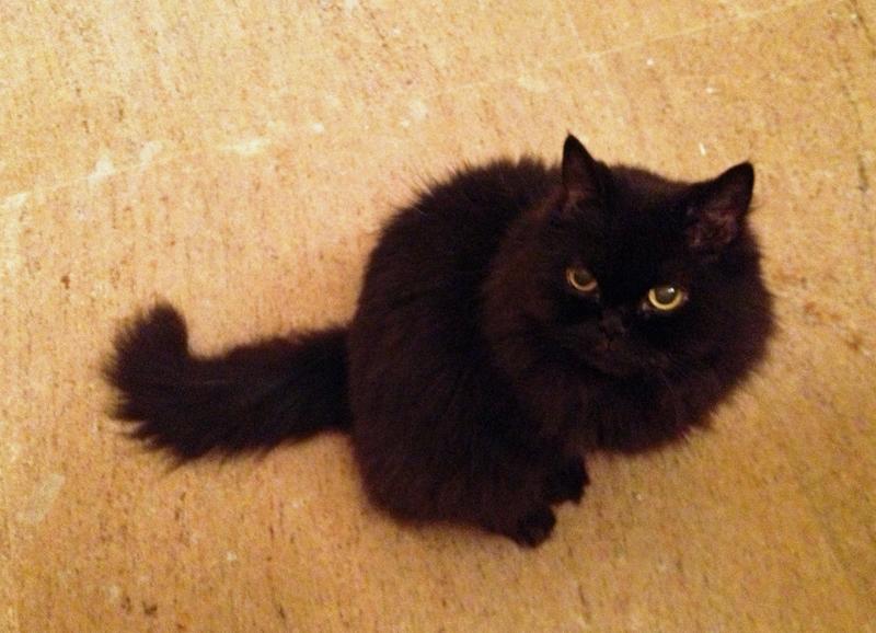 これ、不思議なことに振らない猫はまったく振らない。 本当に不機嫌な時や、狩猟モードにでも入らない限り振らない。 だらーんっとさせてる。
